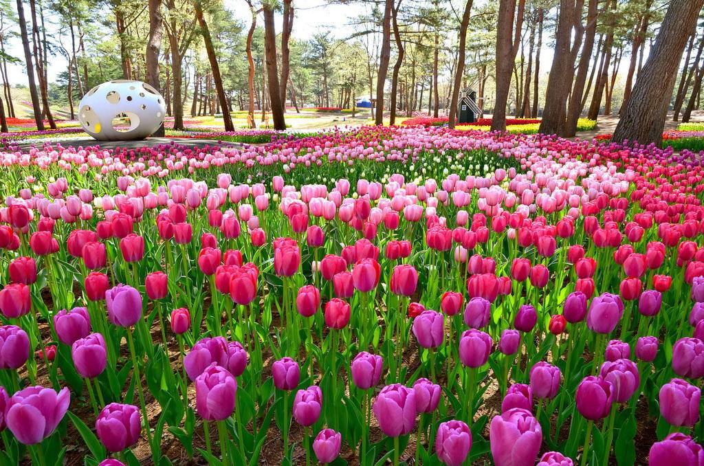 日本茨城常陸海濱花園